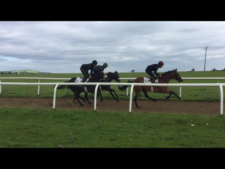 2yo gallop