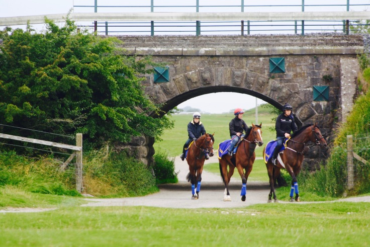 2YOs Following Their Lead Horse