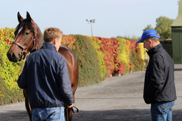 viewing-a-yearling-at-goffs-this-week