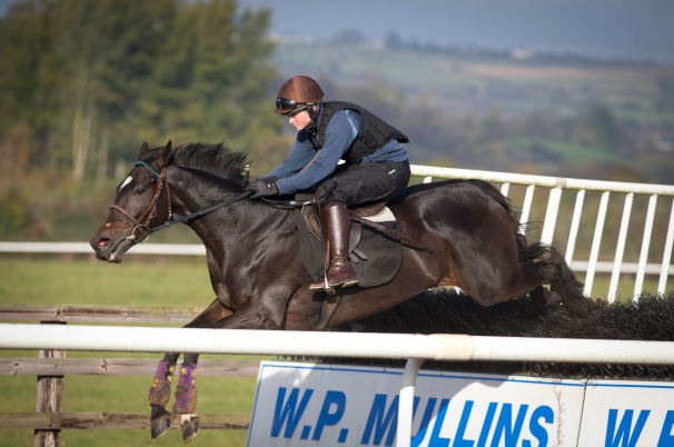 Willie Mullins stable tour