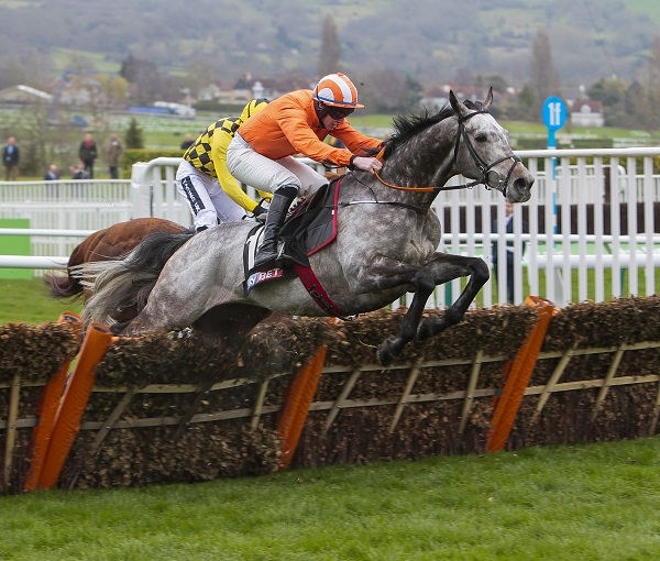 Labaik At Cheltenham